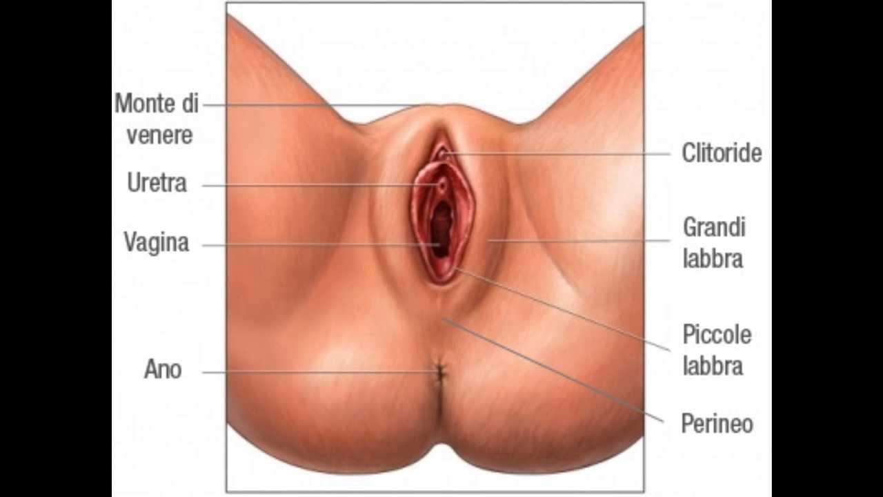 Prelungitoare Penis