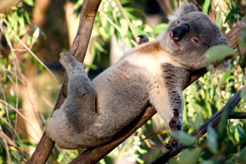 despărțit penis marsupial erectie indapamida