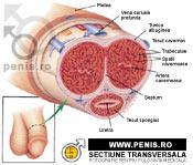 erecție slabă și potență masaj penis pentru bărbați