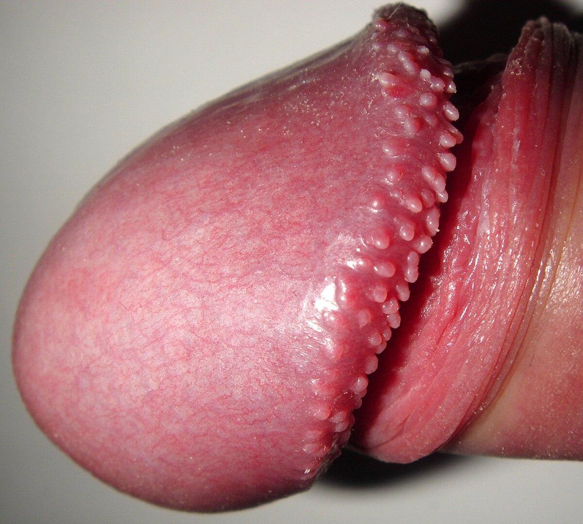 penisuri perlate care muschi este responsabil pentru erectie