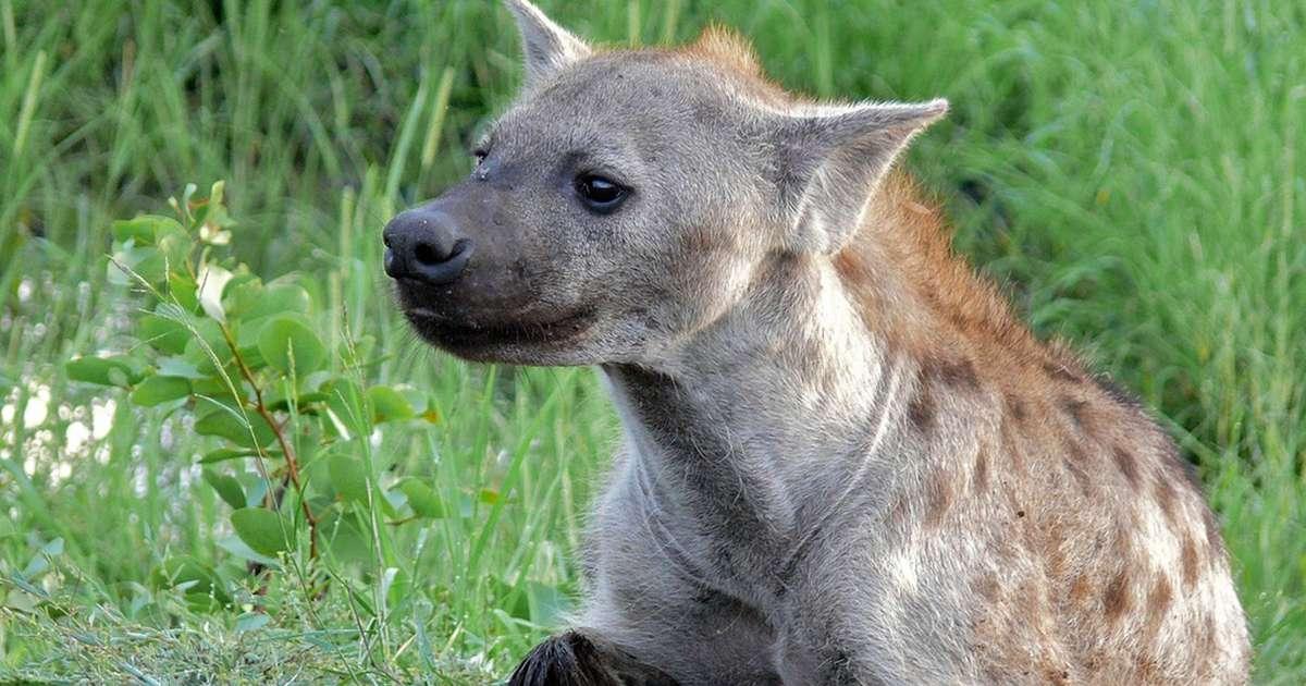 12 curiozități despre animale: Mama Natură nu ne spune chiar tot!