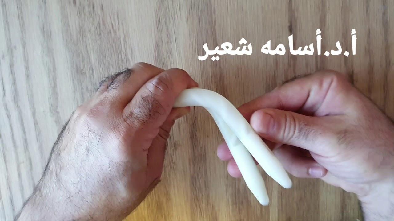 lungimea penisului erect