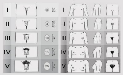 tipuri de penisuri masculine și dimensiuni modul în care este considerată dimensiunea normală a penisului
