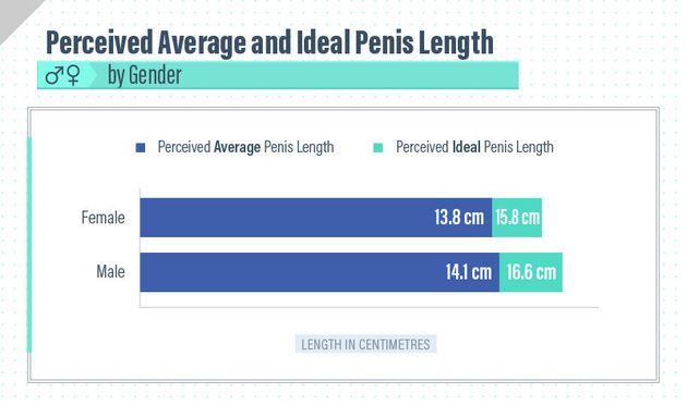 penis standard în cm