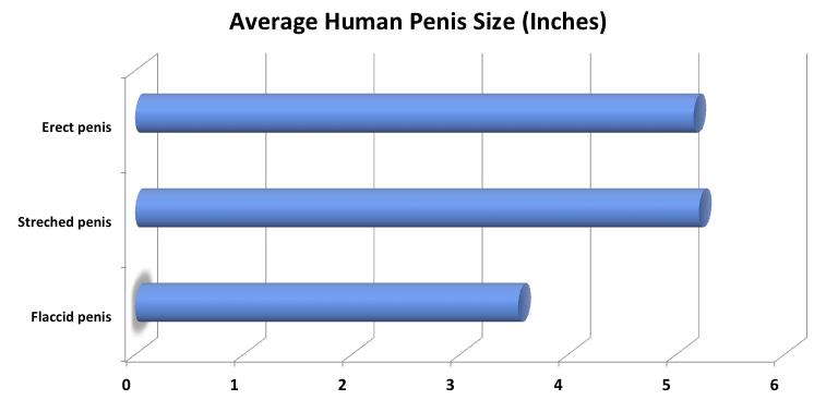 lungimea penisului omului