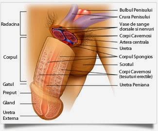 mărirea penisului și a scrotului