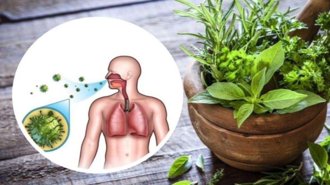 plante pentru potenta masculina