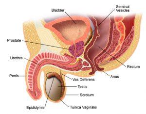 refacerea erecției după prostatită tratamentul disfuncției erectile