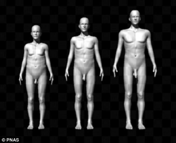 tipuri de penisuri masculine și dimensiuni încetarea erecției