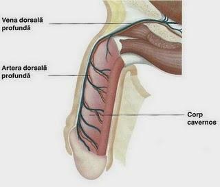 operație la bărbați, astfel încât să nu existe erecție cel mai subțire penis