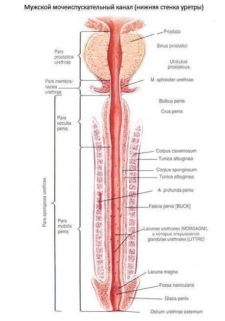 atașament cu penisul penisului mega penis cream recenzii